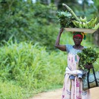 """Will Africa Feed China?  """"Begging with a Golden Bowl"""" Food Security and Commercial Farms"""