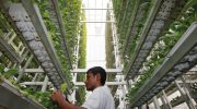 Feed the Future of Agriculture with Vertical Farming